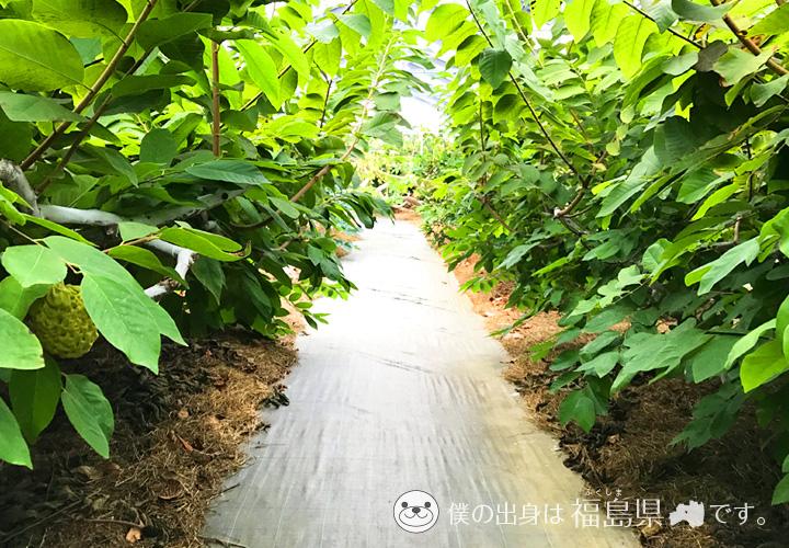 ユートピアファーム宮古島(観光農園)