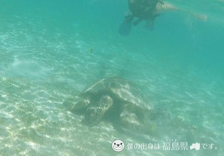 皆田海岸のウミガメ