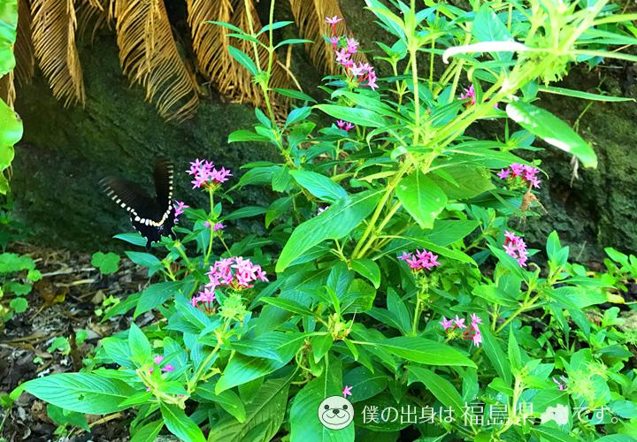 シーサイドガーデンの野生の蝶々