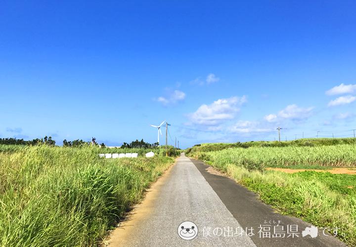 与論島のさとうきび畑