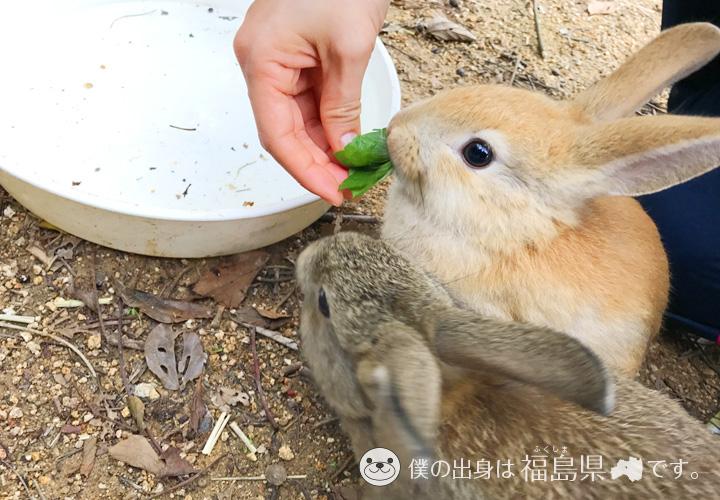 大久野島の葉っぱを食べる子うさぎ