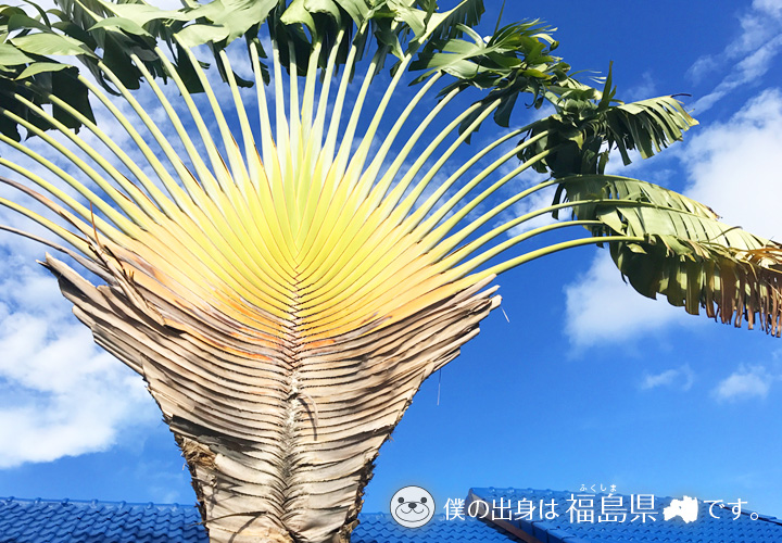 大きな南国の植物